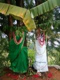 Pooja spécial d'arbre photographie stock libre de droits