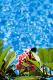 By the pool Royalty Free Stock Photos