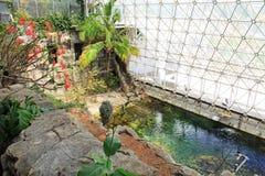 Pool binnen Biosfeer 2 in Tucson Arizona royalty-vrije stock foto