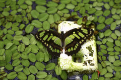Pool for Butterflies Royalty Free Stock Images