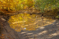Pool on a country road in a forest Stock Image