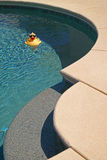 Pool Ducky. A plastic ducky floats in the corner of a backyard swimming pool royalty free stock image