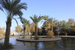 Pool at Ein Fashkha, Einot Tzukim Natural Reserve Oasis in the Holy Land Stock Photography