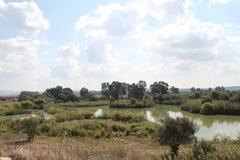 Pool en Flora Nature Landscape stock fotografie