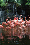 Pool of Flamingo Royalty Free Stock Photos