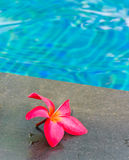 Pool and flower Royalty Free Stock Photography