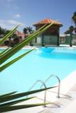 Pool Foliage Stock Image