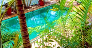 Pool and Garden area. A row of palm trees surround the inground pool with tiled walking area situated at the back of a house Royalty Free Stock Image