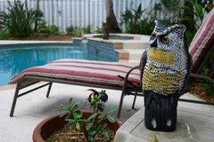 Pool and Garden Pest Protection. A decorative  plastic owl used for garden and pool pest protection against rodents and birds and other animals Stock Images