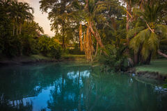 Pool in the garden surrounded by trees Stock Photography