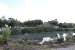 Pool, het Nationale Park van Ein Afek, Israël royalty-vrije stock foto