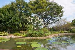 Pool im Park mit Lotosblättern und -blumen Lizenzfreie Stockfotos