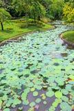 Pool of leaf lotus Stock Photo