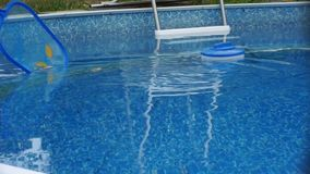 Pool maintenance - Cleaning leaves from pool stock video