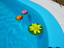 Pool met waterlelies Stock Foto's