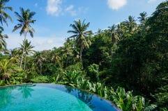 Pool mit Dschungelansicht Lizenzfreies Stockfoto