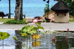 Pool mit Lilien und Palmen um es Meerblick von Indonesien lizenzfreie stockfotos