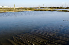 Pool of Oyster farm Stock Photography