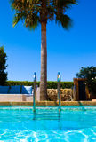 Pool and palm tree Royalty Free Stock Photos
