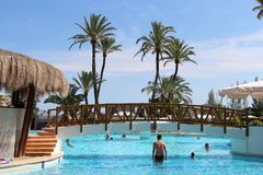 Pool with palm trees in the background Royalty Free Stock Images