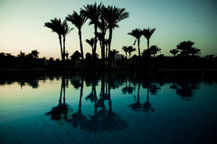 Pool with palm trees near the ocean during a beautiful sunset. Summer vocation Stock Photography