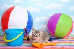 Pool party kitten Royalty Free Stock Photos