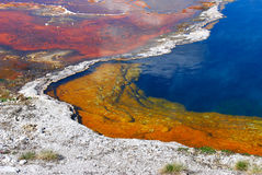 A Pool of Rainbows. The colorful bacteria lives in the hot geysers and along river edges of Yellowstone National Park Stock Photos