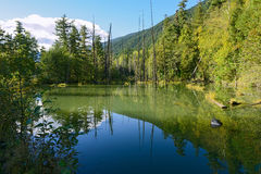 Pool-reflektierende Bäume und Berge 01 Lizenzfreie Stockfotografie