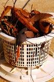 Pool skimmer basket full of leaves. Royalty Free Stock Images