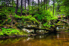 A pool at the top of Adam's Falls, at Ricketts Glen State Park, Stock Photo