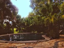 Pool trees palm trees oasis. A pool outside the small town Nimbin Royalty Free Stock Photos
