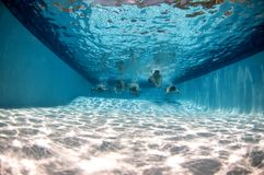 Pool underwater with swimmers. Pool underwater with active swimmers watersurface is visible Stock Image