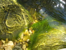 Pool of water. Ripples and algea in a pond Stock Photos