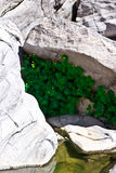 Pool of water in desert rocks. A view looking down into a small pool of water and green vegetation growing in rocks on the high Arizona desert Stock Image