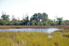 POOL OF WATER WITH GRASS AND REEDS. View of some dead trees between green trees and vegetation next to a pool of water in an African grassland stock photography