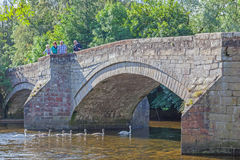 Pooley Bridge Swan Family Royalty Free Stock Photo
