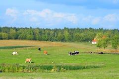 Pools de zomer landelijk landschap stock afbeelding