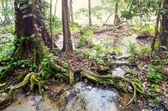 Pools in Guatemala Lizenzfreie Stockfotografie
