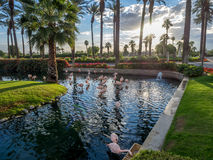 Pools at the JW Marriott Desert Springs. PALM DESERT, CA - NOV 18: View of the Pools at the JW Marriott Desert Springs Resort & Spa  in Palm Desert, California Royalty Free Stock Photo