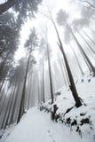 Poolse bergen tijdens de winter Stock Foto's