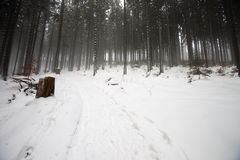 Poolse bergen tijdens de winter Royalty-vrije Stock Foto's