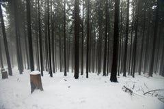 Poolse bergen tijdens de winter Stock Foto