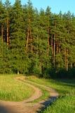 Poolse de zomerscène in het bos stock foto