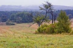 Poolse landschappen - Roztocze-Heuvels - Dahany royalty-vrije stock afbeeldingen