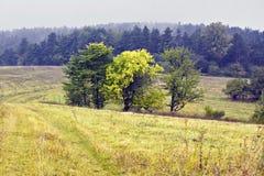 Poolse landschappen - Roztocze-Heuvels - Dahany royalty-vrije stock afbeelding