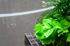 Poolside-Pflanzer Stockfotografie
