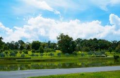 Poolwater und Palmen-Garten Stockbild
