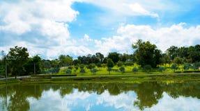 Poolwater und Palmen-Garten Stockfotografie