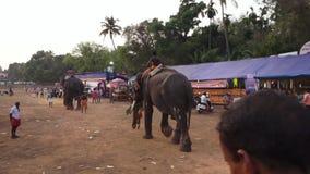 Poonam Festival-olifanten op de stoffige weg worden bereden die stock video