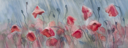 Poopies rainy field. Watercolor flowers poppies field in the rain Royalty Free Stock Photos